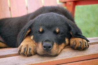 dog-awake